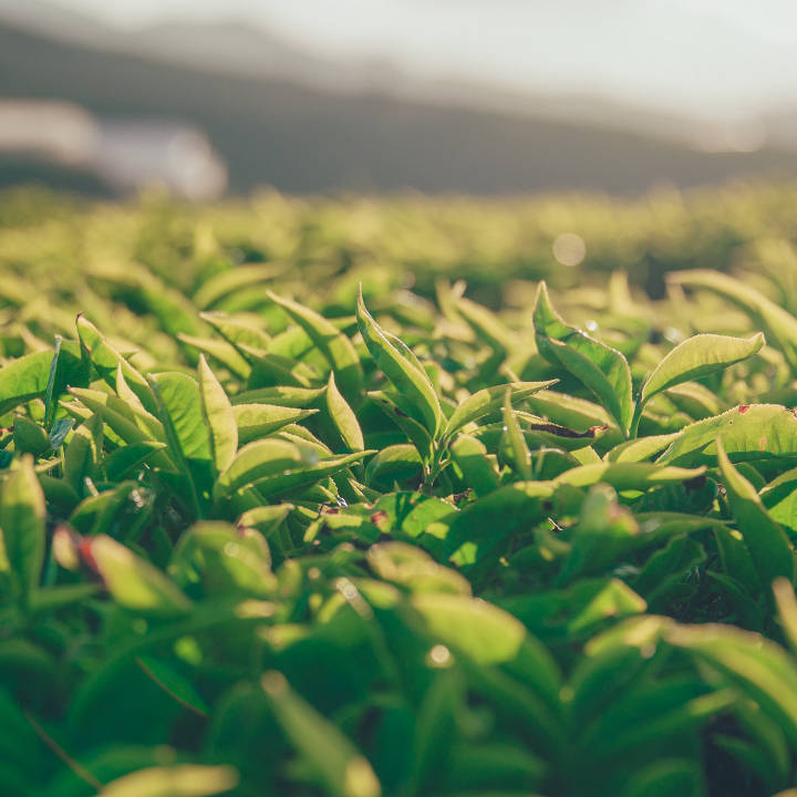 Wholesale rates for Jilly's Fine Leaf Tea